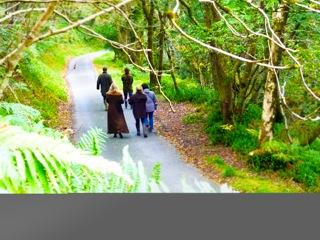 Philosophy & Foraging Walk
