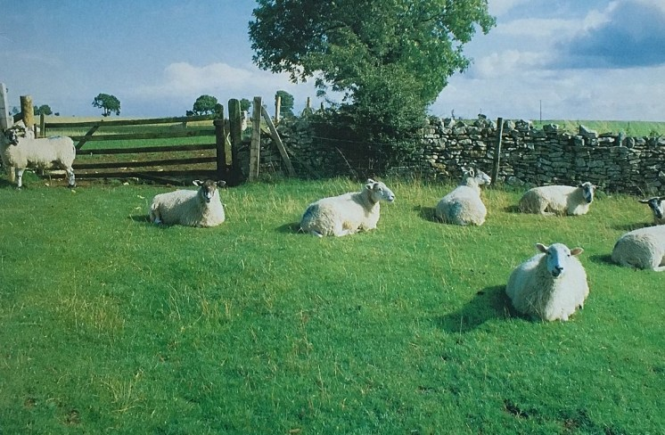 KLF Chill Out Album