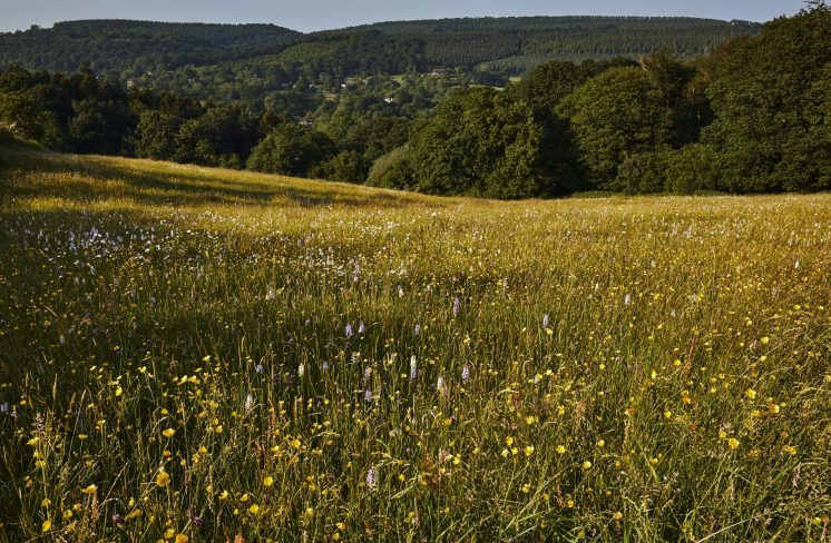 ancient meadow