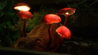 DIY Mushroom Lights with Forest Wood  iD Lights