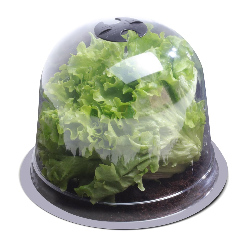 cloche a salades x12 serre de protection pour plants idmarket