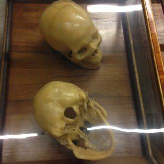 Specola_anatomie_crâne