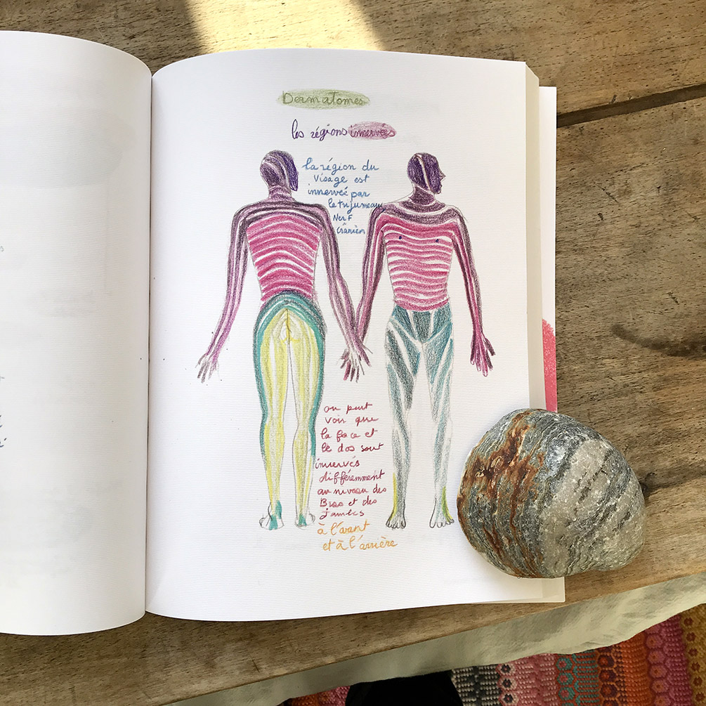 """Une page illustrée du livre """"Je suis le cahier d'anatomie…"""""""