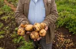 Man holding potatoes