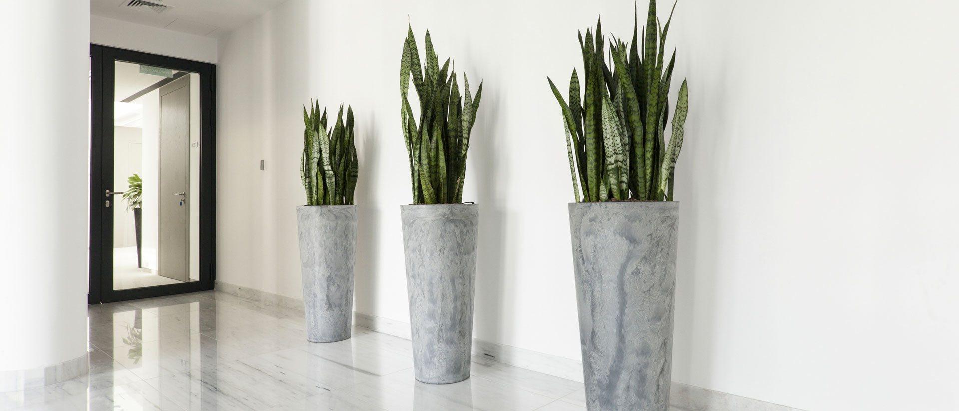 Noleggio piante Roma Idroservice