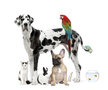 Curso de Veterinaria  Tcnico veterinario