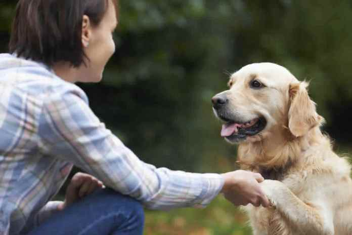 Can Humans Communicate With Animals?