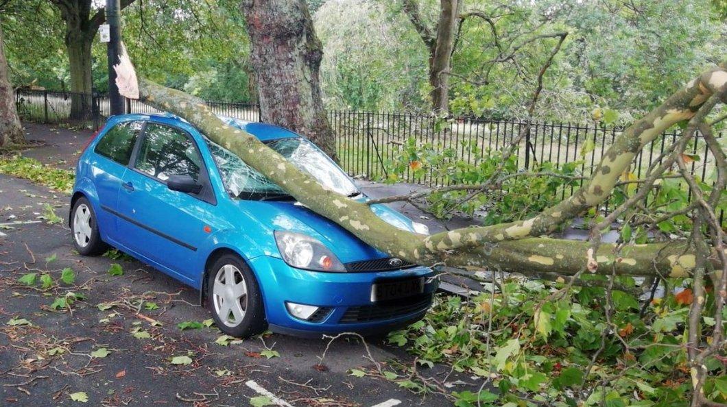 Ο κίνδυνος από πτώσεις δέντρων είναι μεγάλος / Φωτογραφία: Twitter