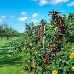 pomi fructiferi livada