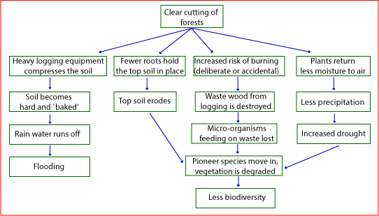 The flow chart illustrates the consequences of deforestation ielts you should write at least 150 words ccuart Image collections