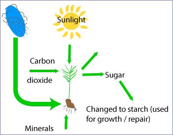plants create food