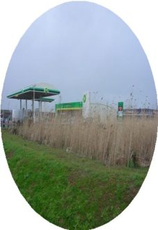reed bed system petrol