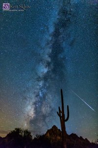 Sklute_SaguaroStarryNight