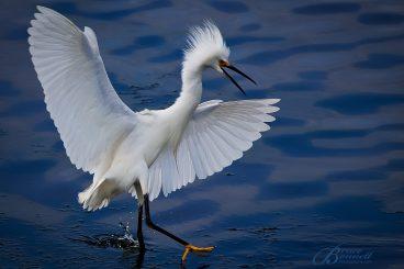 Bolsa Chica Bird Safari