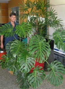 Caboolture Indoor Plant Hire  Accredited by IPA