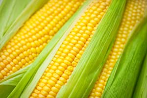 Corn - Real seed capital for investors