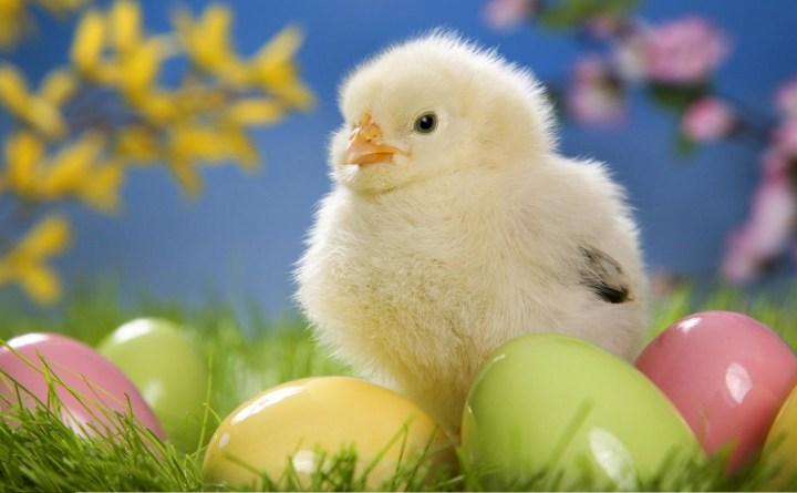 Cerco offro uova