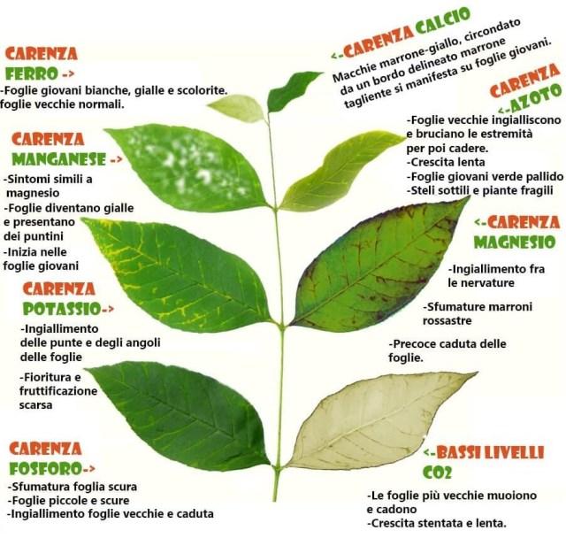 carenze-nutritive-piante-foglie
