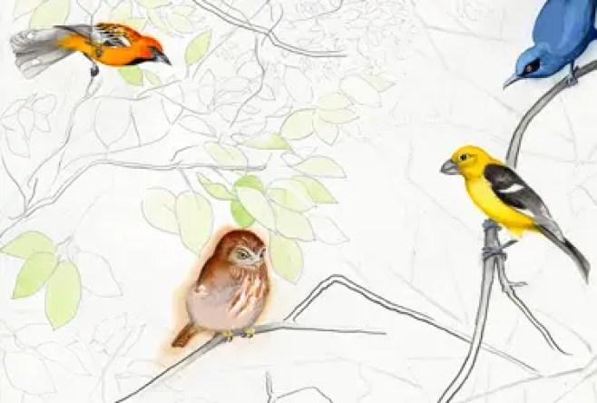 David Tomb: Birds of The Sierra Madre
