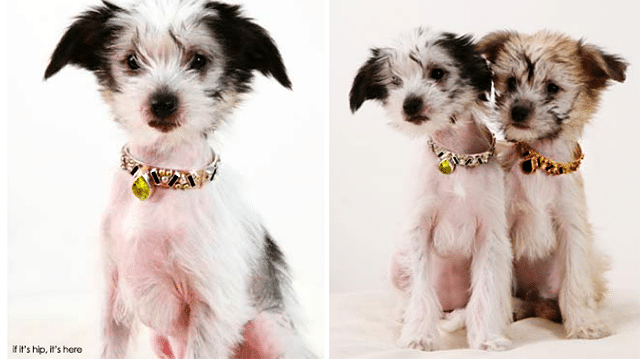 matching jewelry for pets and people