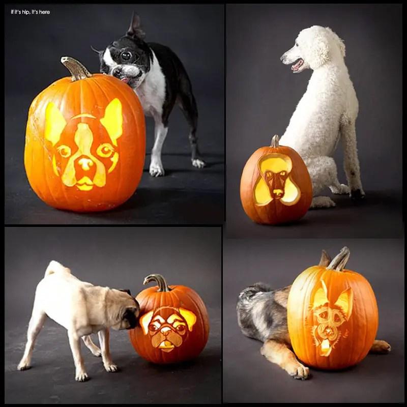 Dog breed jack-o-lanterns