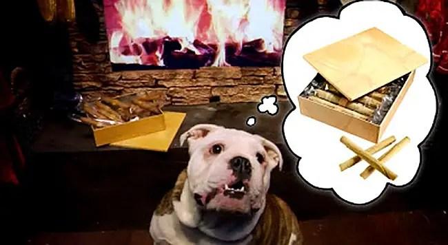 BG+bulldog+dreaming