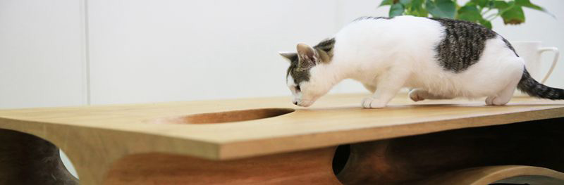 CAT TABLE 5 IIHIH