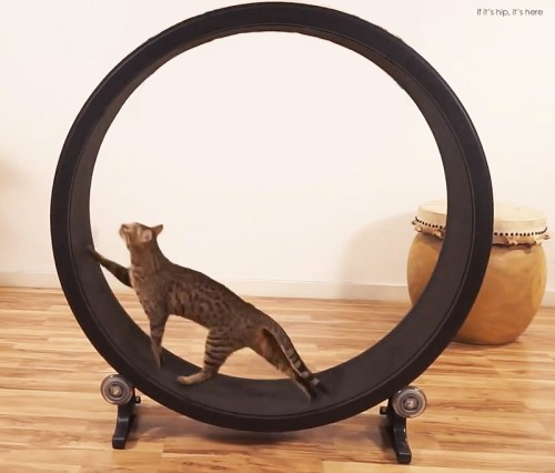 Read more about the article Faster Pussycat, Run, Run! Now There's An Exercise Wheel For Cats.