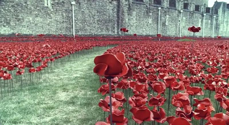 ceramic poppies armistice day