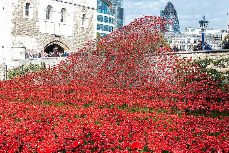 armistice day tower of london
