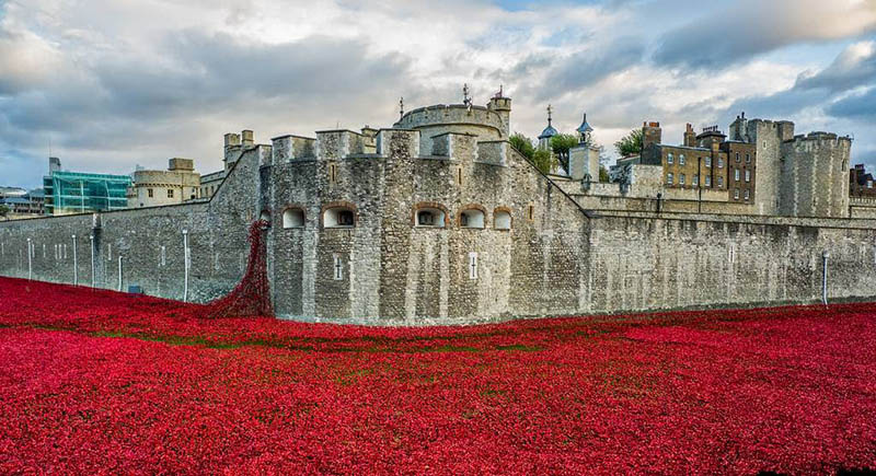 tower+of+london+poppy+poppies