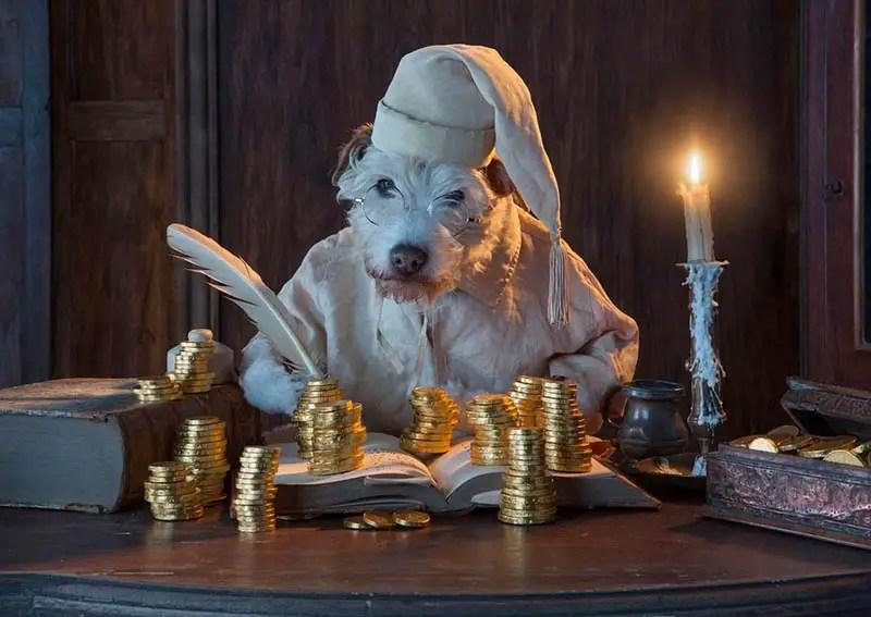 dog dressed as scrooge