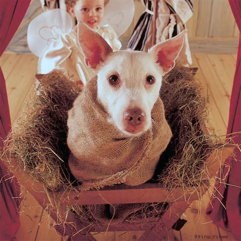 'Nativity' detail Paddy 1998
