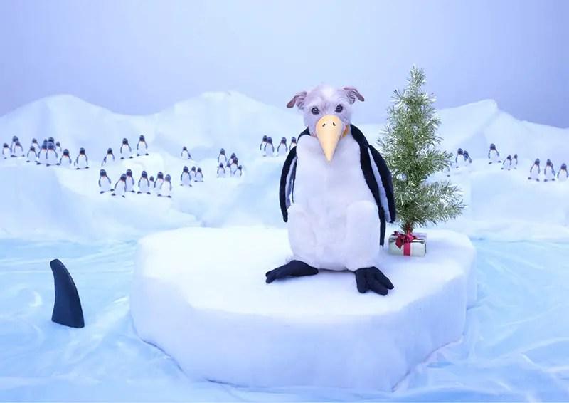dog dressed as penguin