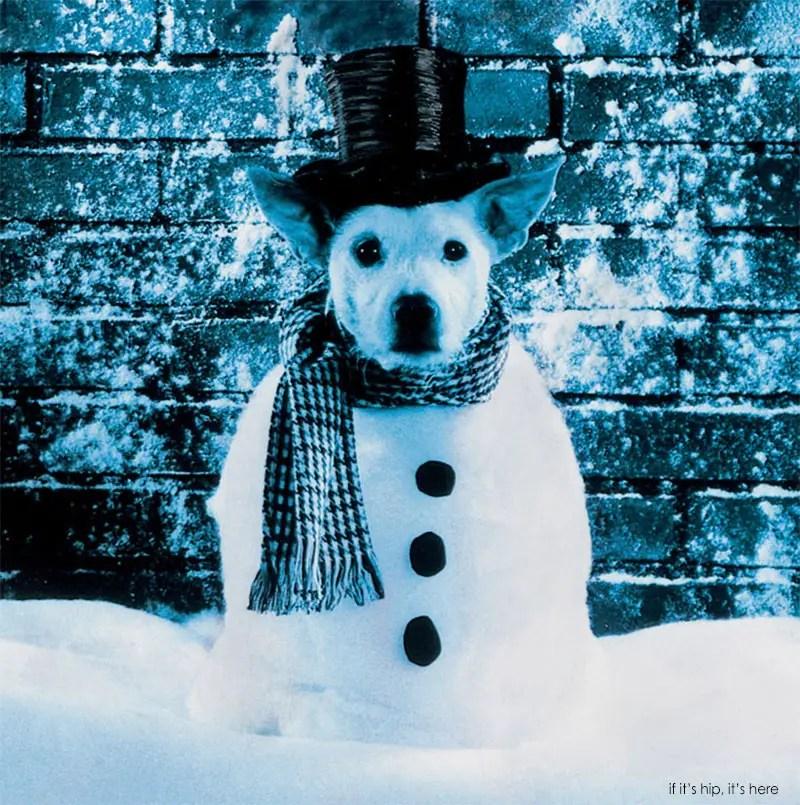 dog as snowman