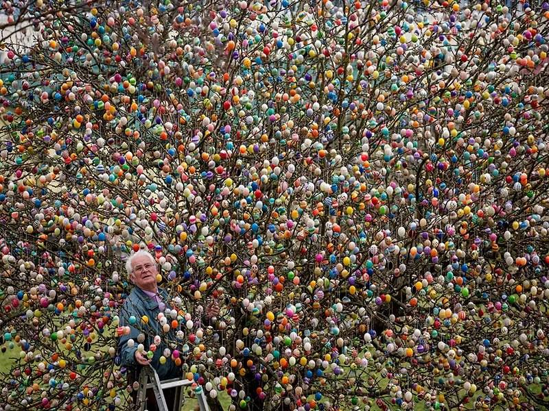 volker and easter egg tree IIHIH