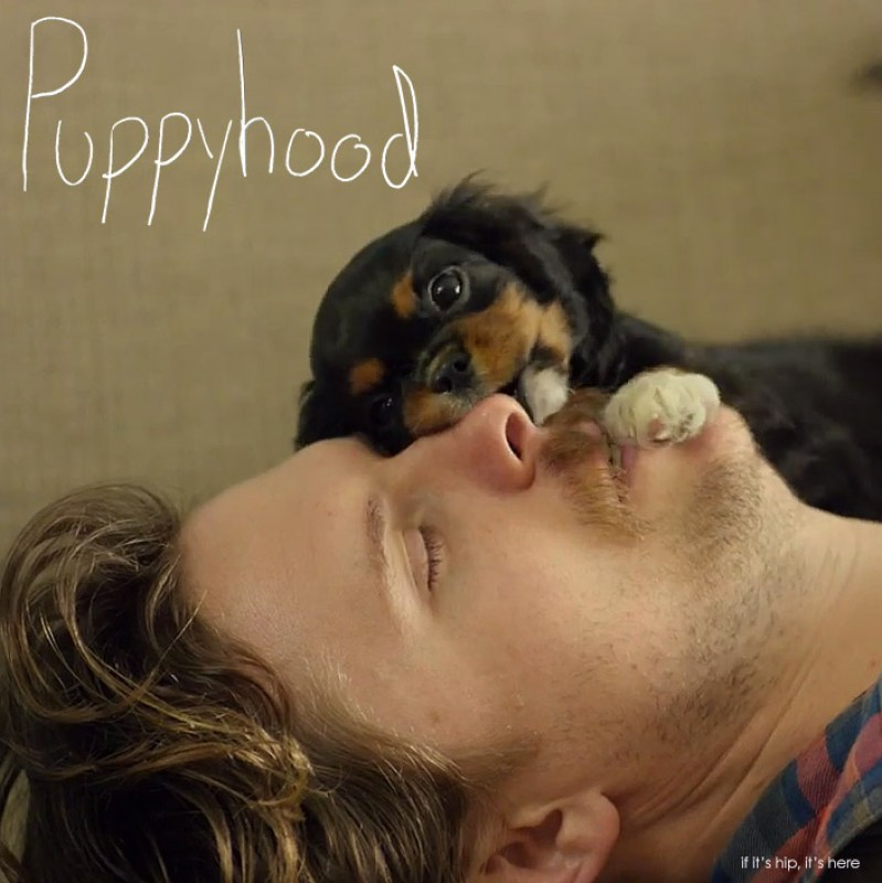 Puppyhood Minutes Of DogBonding That Will Melt Your Heart - 26 dogs puppyhood photos