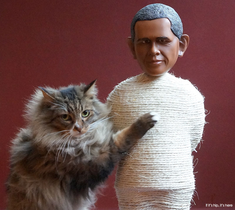 barack scratching post in use - if its hip its here