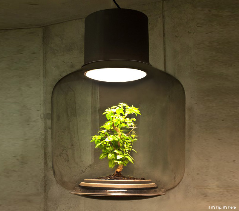 nui studio lamp mygdal at if it's hip, it's here