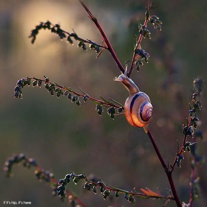 Snail photos by Katarzyna Załużna