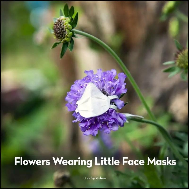 Flowers Wearing Little Face Masks