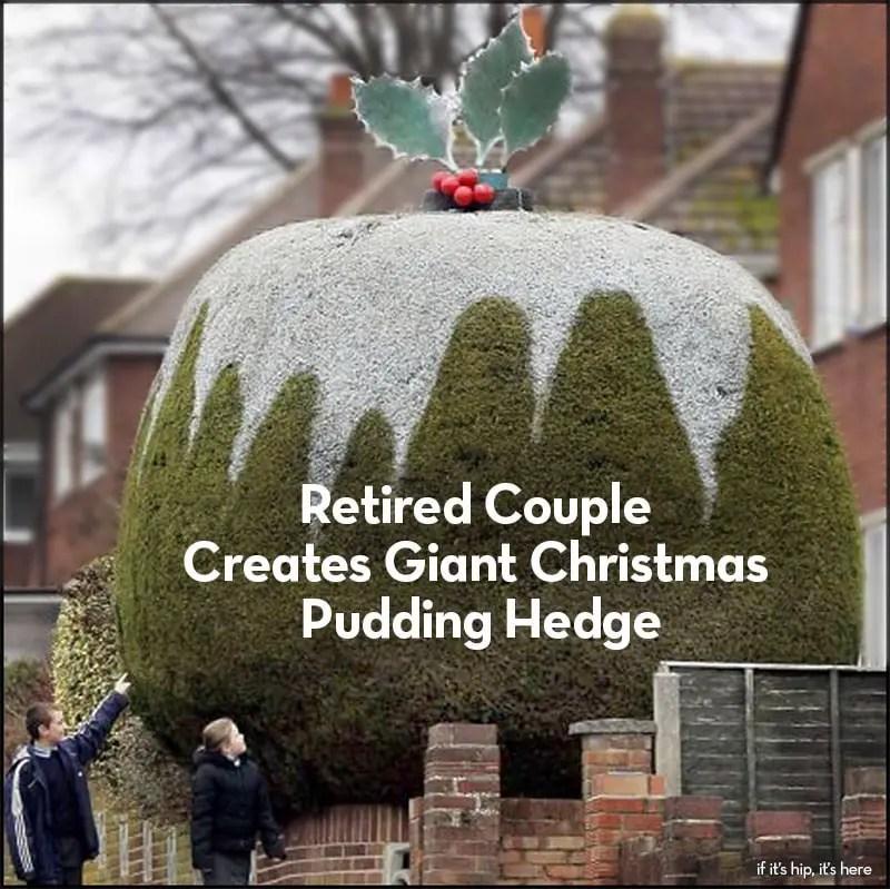 giant christmas pudding hedge