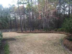 pine straw columbia sc