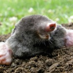 remove moles