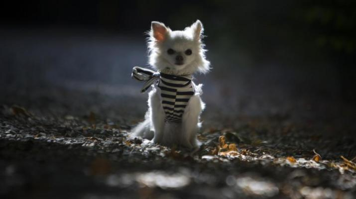 ifmat - Tehran made public dog walking illegal as part of campaign against dog ownership