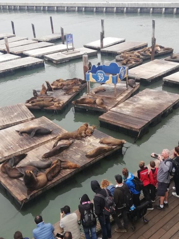 molo in cui vedere i leoni marini