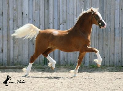 HB_Pegasus_klein