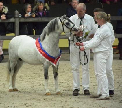 Champion A und Tagesreservechampion Oldenzijlster Atllantis Ermelo2016_Foto: Rosenthal