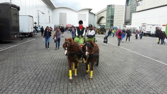 Hansepferd3