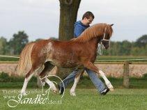 Foto Tierfotografie Jandke (5)